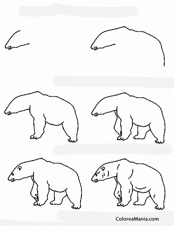 Colorear comment dessiner un ours polar