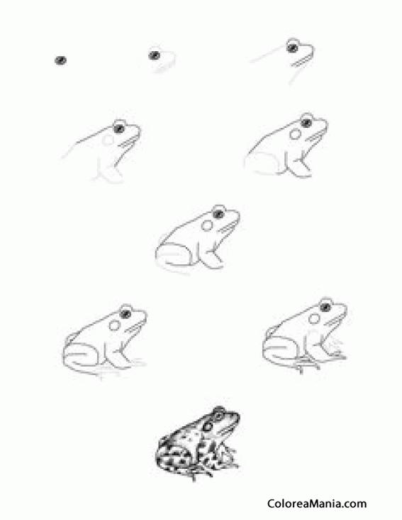 Colorear Dibujando Un Sapo 2 Como Dibujar Una Rana Dibujo